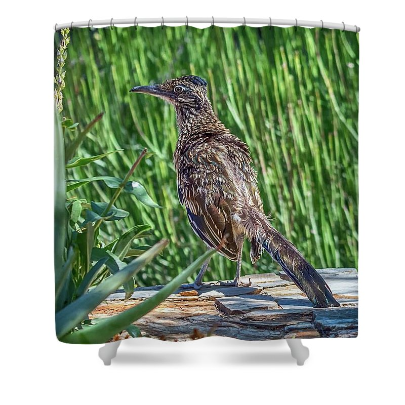 Greater Shower Curtain featuring the photograph Greater Roadrunner by Tam Ryan