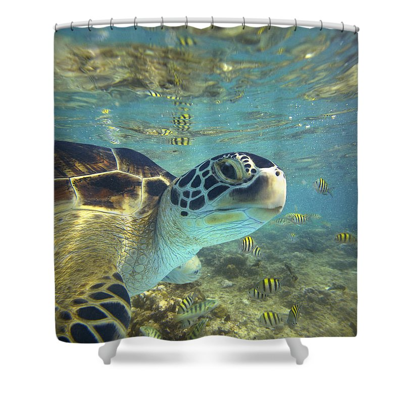 00451417 Shower Curtain featuring the photograph Green Sea Turtle Balicasag Island by Tim Fitzharris