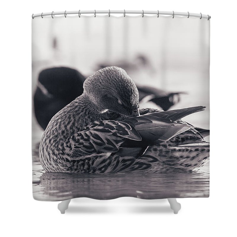 Duck Shower Curtain featuring the photograph Grooming by Annette Bush