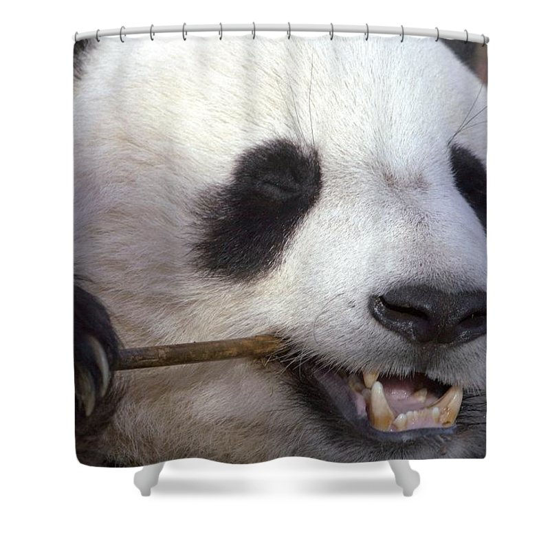 Panda Shower Curtain featuring the photograph Happiness by Mitch Cat