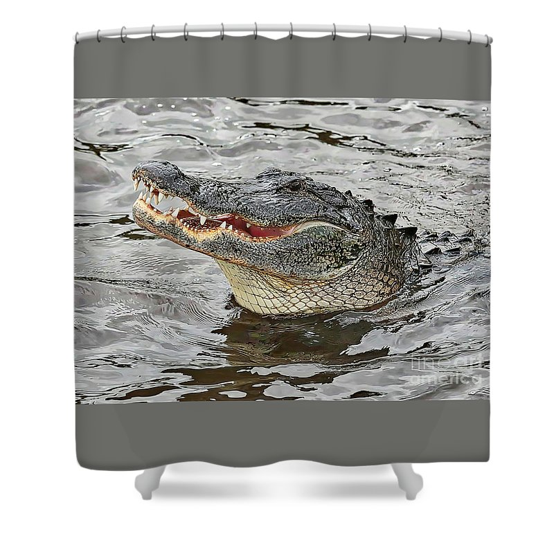Gator Shower Curtain featuring the photograph Happy Florida Gator by Carol Groenen
