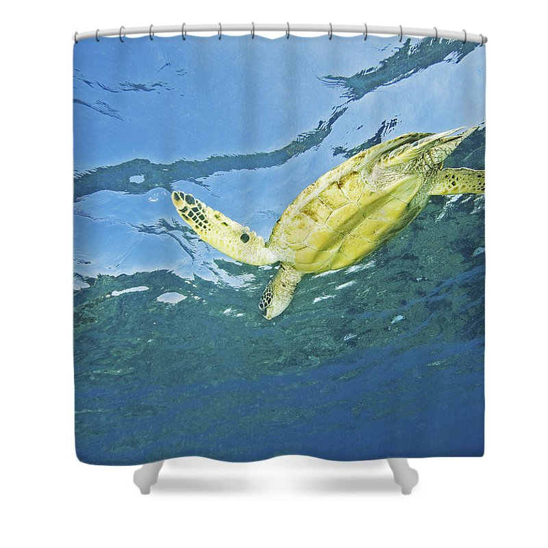 66-csm0245 Shower Curtain featuring the photograph Hawaii, Green Sea Turtle by Ron Dahlquist - Printscapes