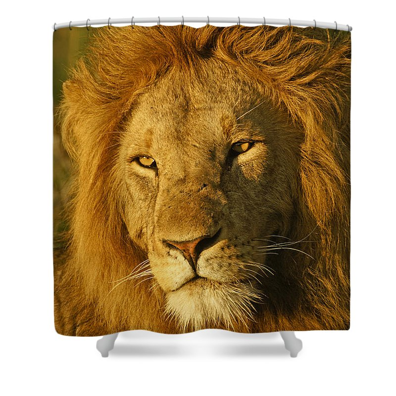 Lion Shower Curtain featuring the photograph His Majesty by Michele Burgess