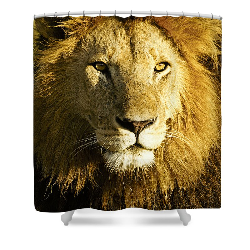 Lion Shower Curtain featuring the photograph His Royal Highness by Michele Burgess