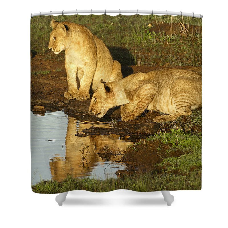 Lion Shower Curtain featuring the photograph I Can See Myself by Michele Burgess