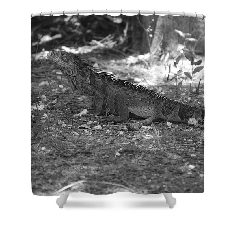 Black And White Shower Curtain featuring the photograph I Iguana by Rob Hans