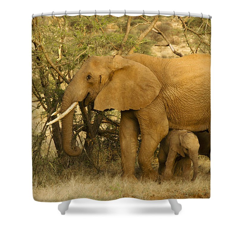 Africa Shower Curtain featuring the photograph I Love My Big Mama by Michele Burgess