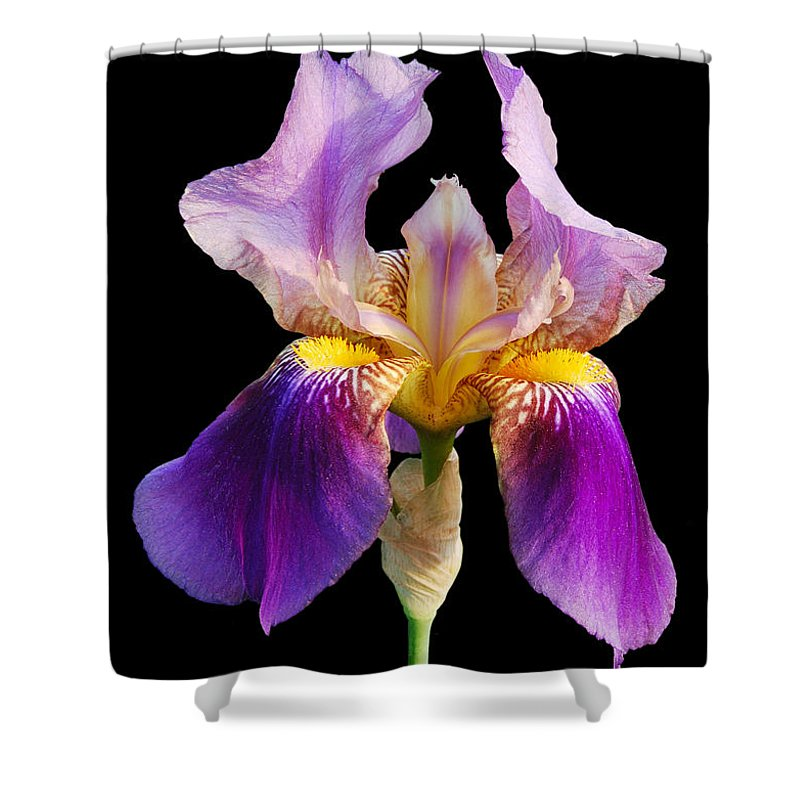 Flower Shower Curtain featuring the photograph Iris 5 by Michael Peychich