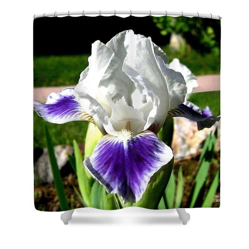 Iris Shower Curtain featuring the photograph Iris Elegance by Will Borden