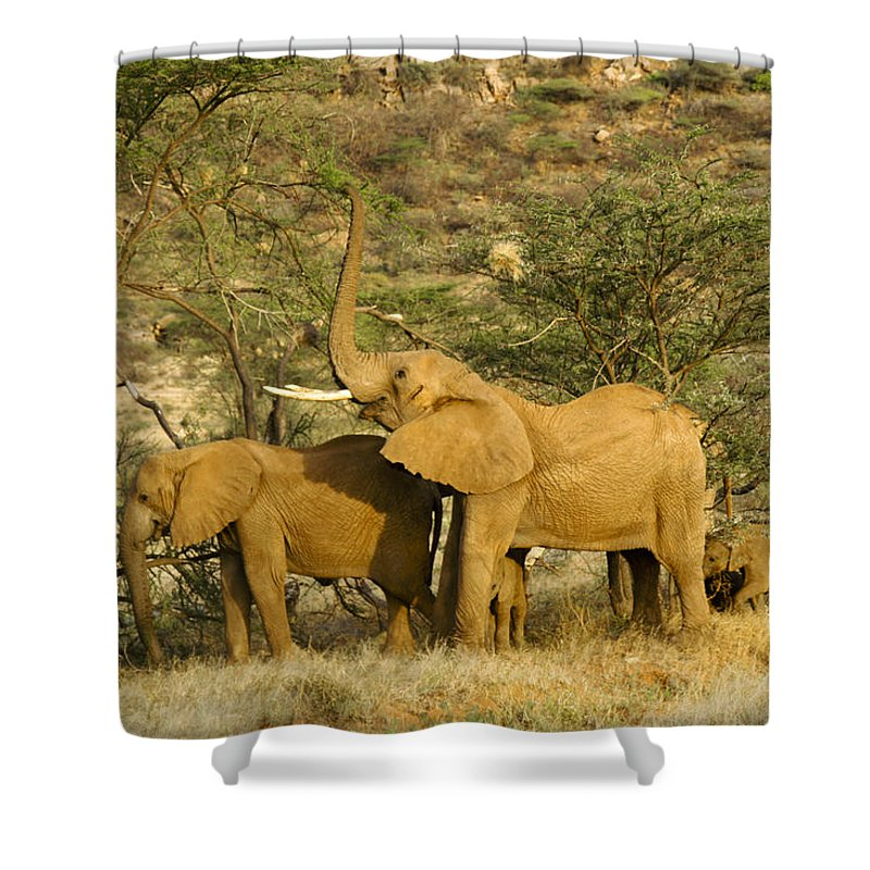 Africa Shower Curtain featuring the photograph It's A Stretch by Michele Burgess