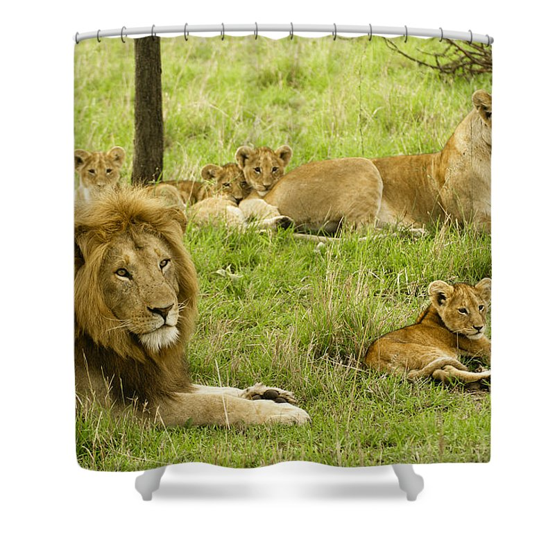 Lion Shower Curtain featuring the photograph It's All About Family by Michele Burgess