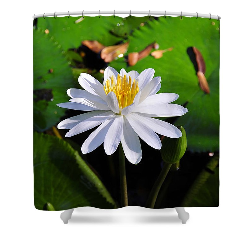 Flower Shower Curtain featuring the photograph Lady Of The Lake by David Lee Thompson