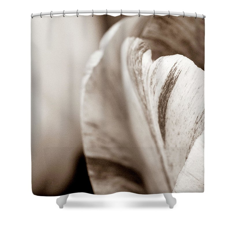 Tulip Shower Curtain featuring the photograph Layers Of Tulips by Marilyn Hunt