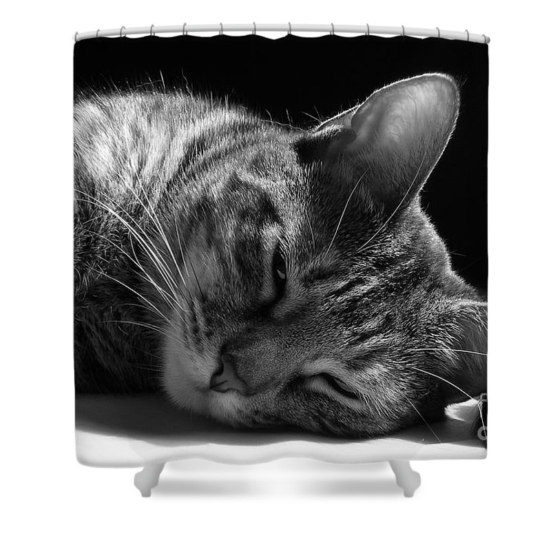 Cat Shower Curtain featuring the photograph Lazy Afternoon by Maria Bonnier-Perez