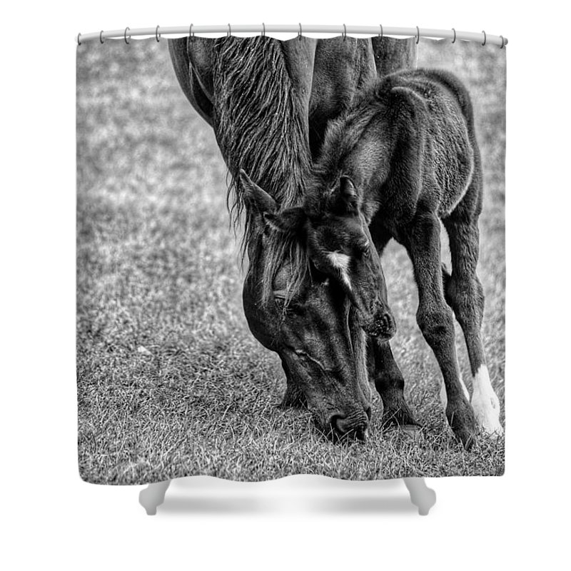 Horse Shower Curtain featuring the photograph Lean On Me by Joseph Caban