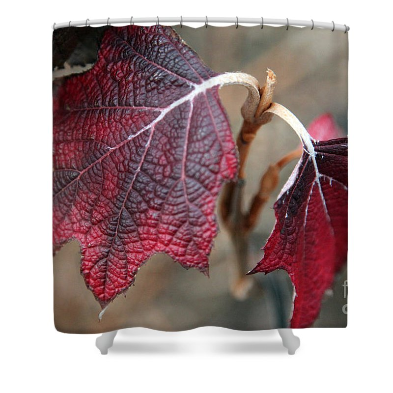 Fall Shower Curtain featuring the photograph Leaves by Amanda Barcon