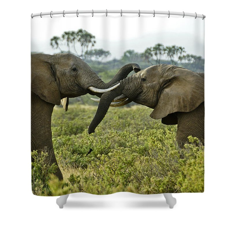 Africa Shower Curtain featuring the photograph Let's Get Acquainted by Michele Burgess