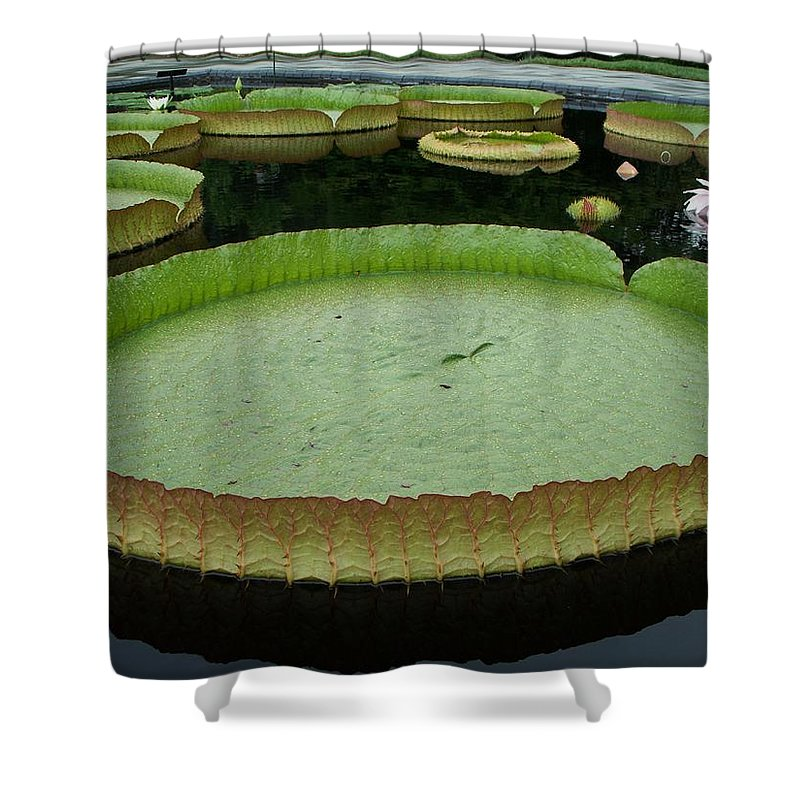 Lily Shower Curtain featuring the painting Lily Pads by Eric Schiabor