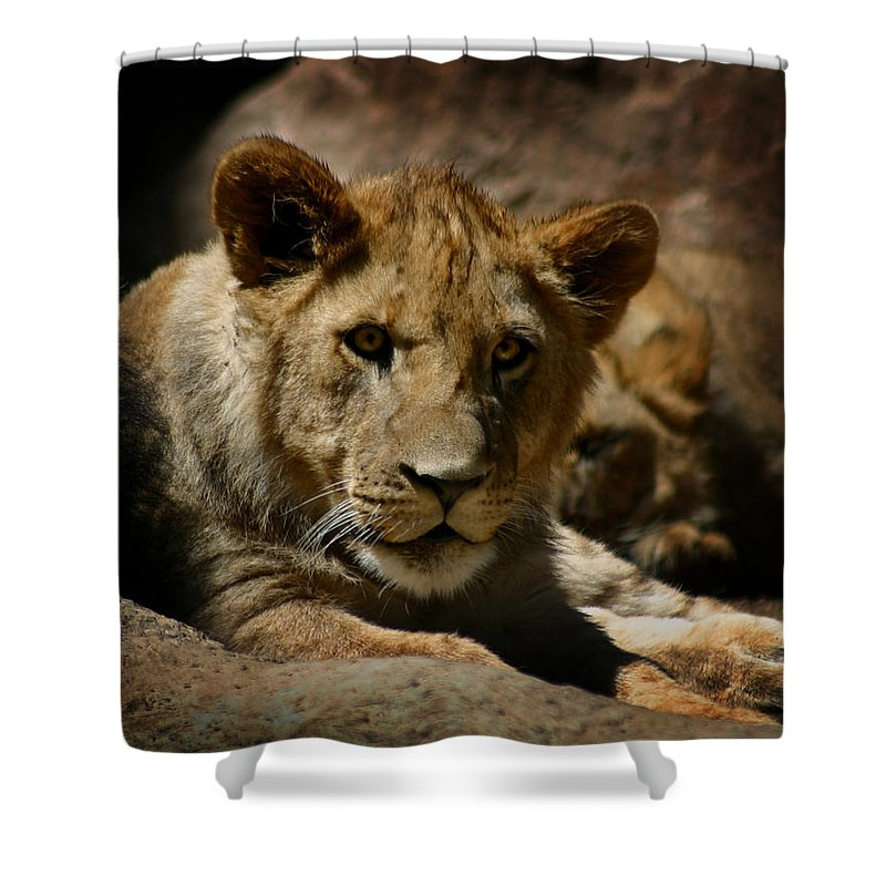 Lion Shower Curtain featuring the photograph Lion Cub by Anthony Jones
