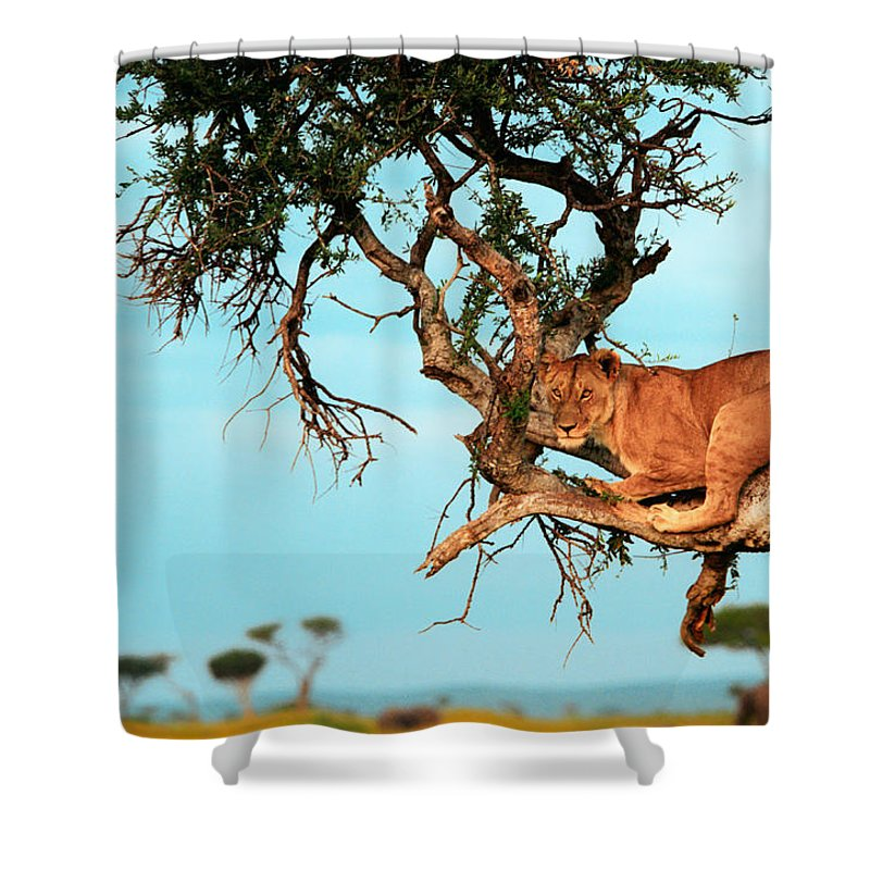 Africa Shower Curtain featuring the photograph Lioness In Africa by Sebastian Musial
