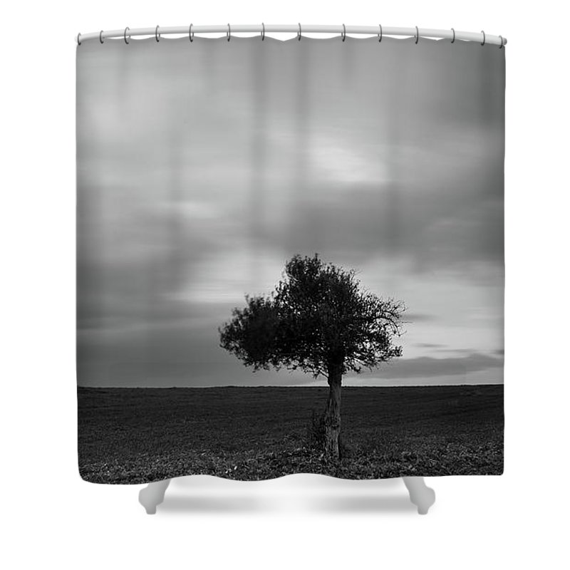 Olive Tree Shower Curtain featuring the photograph Lonely Olive Tree In A Green Field And Moving Clouds by Michalakis Ppalis