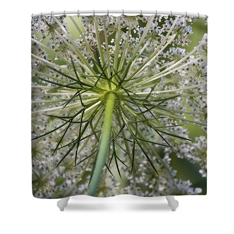 Queen Anne's Lace Shower Curtain featuring the photograph Look Up by Teresa Mucha