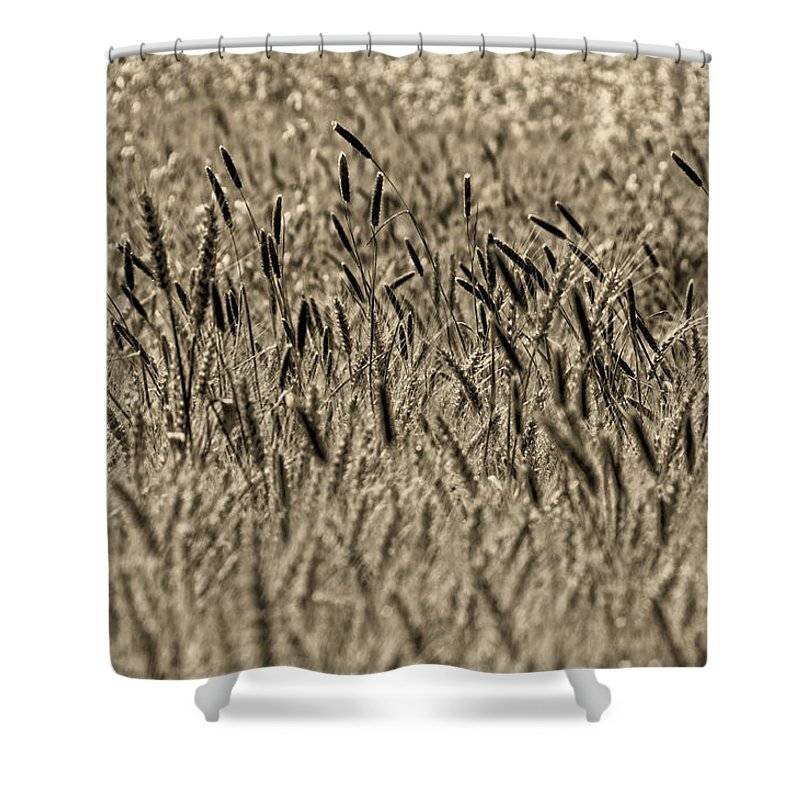Shower Curtain featuring the photograph Harvest Time by Deb Cohen