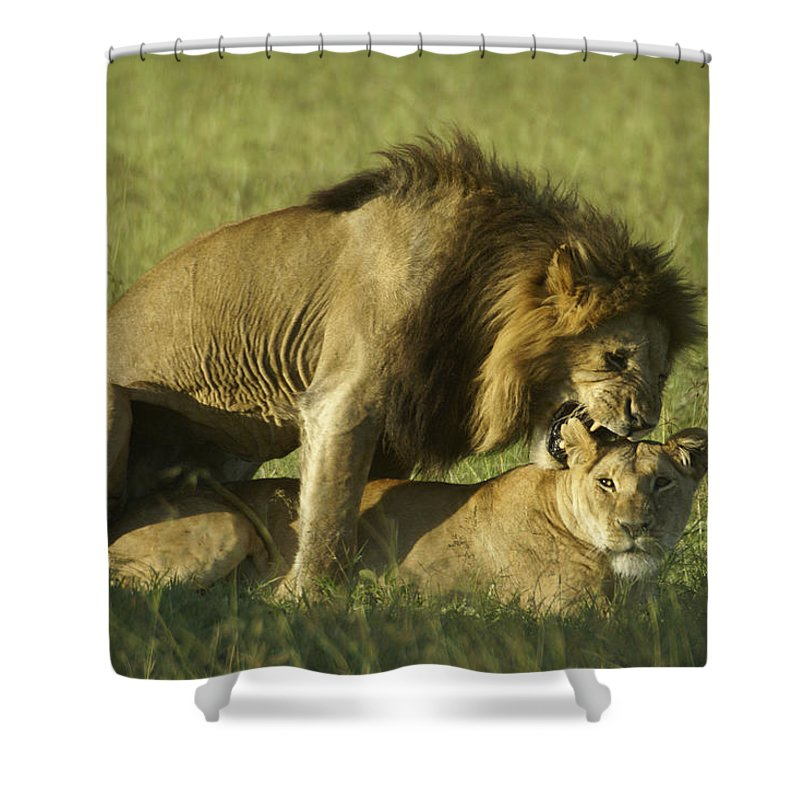 Africa Shower Curtain featuring the photograph Love Bite by Michele Burgess