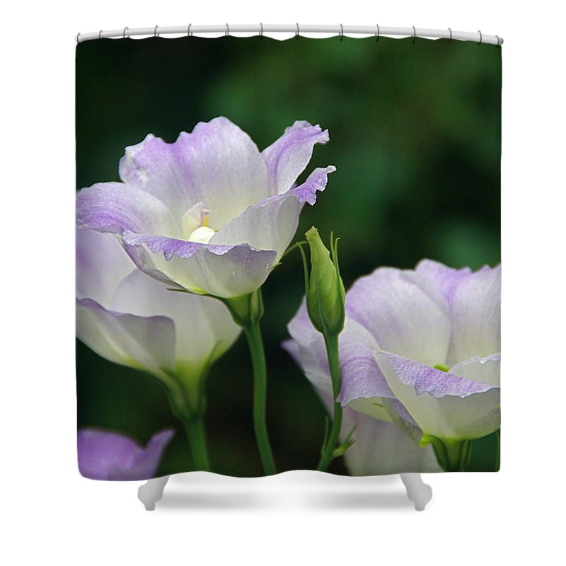 Lisianthus Shower Curtain featuring the photograph Lovely Lisianthus by Byron Varvarigos