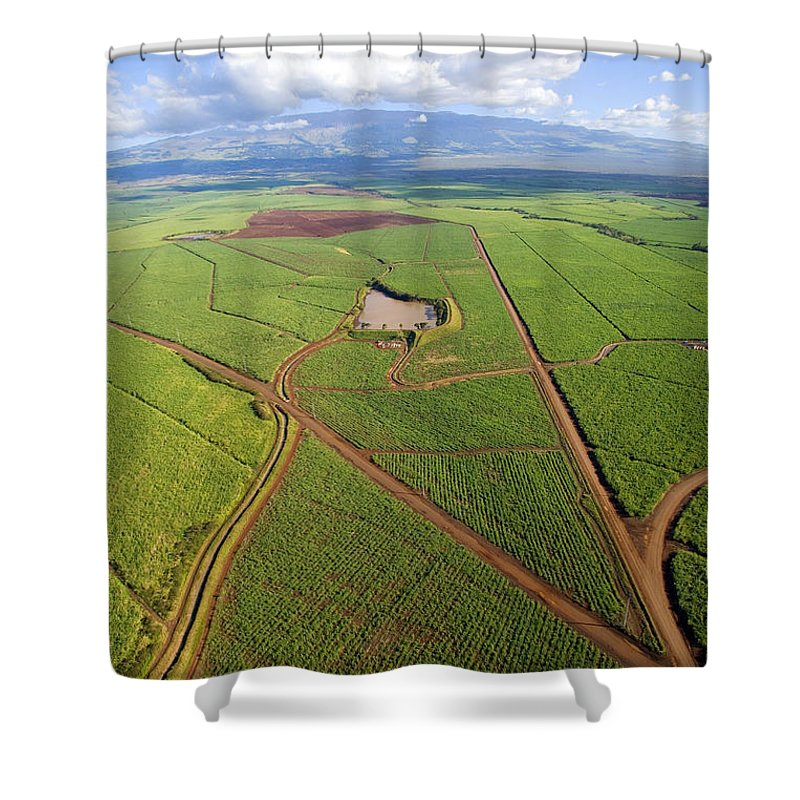 Above Shower Curtain featuring the photograph Maui Sugar Cane by Ron Dahlquist - Printscapes