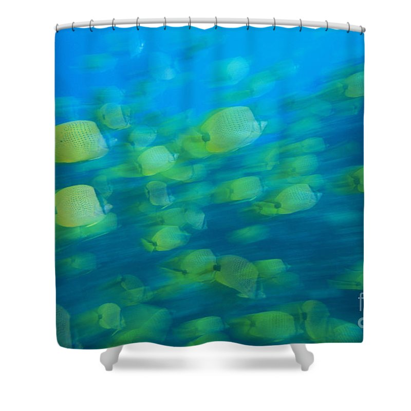 Active Shower Curtain featuring the photograph Milletseed Butterflyfish by Dave Fleetham - Printscapes