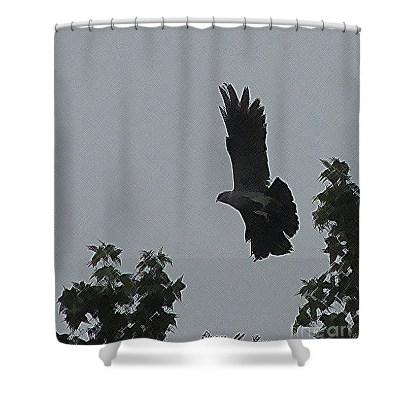Bird Shower Curtain featuring the photograph Mississippi Kite In Flight by Donna Brown