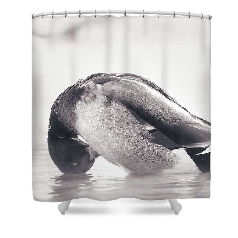 Duck Shower Curtain featuring the photograph Morning Bath by Annette Bush