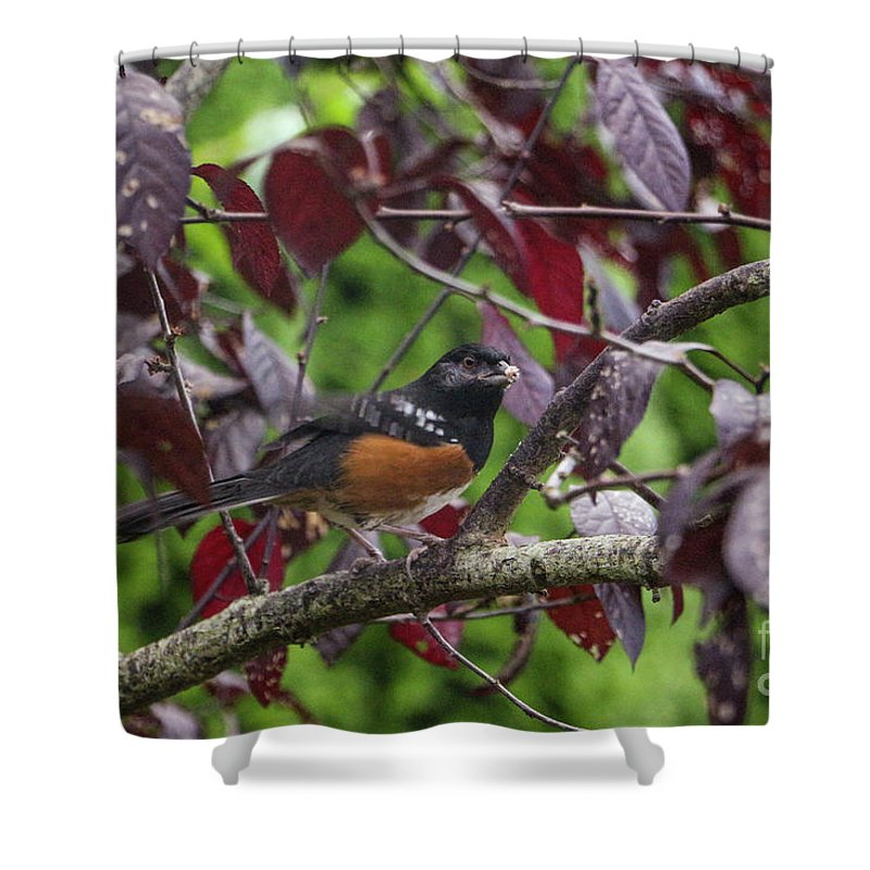 Art Shower Curtain featuring the photograph My Best Side by Dorothy Hilde