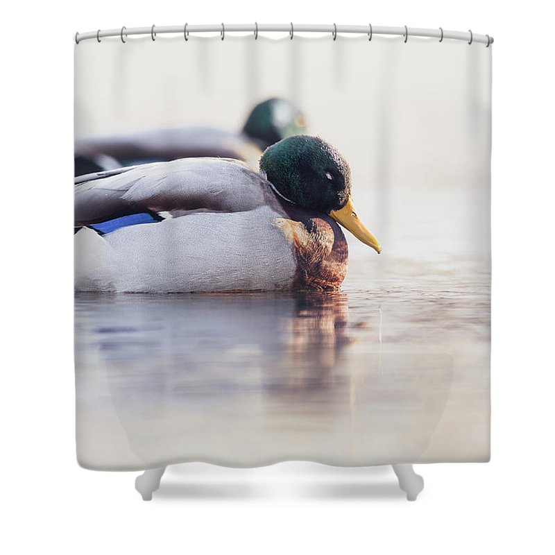Bird Shower Curtain featuring the photograph Napping by Annette Bush