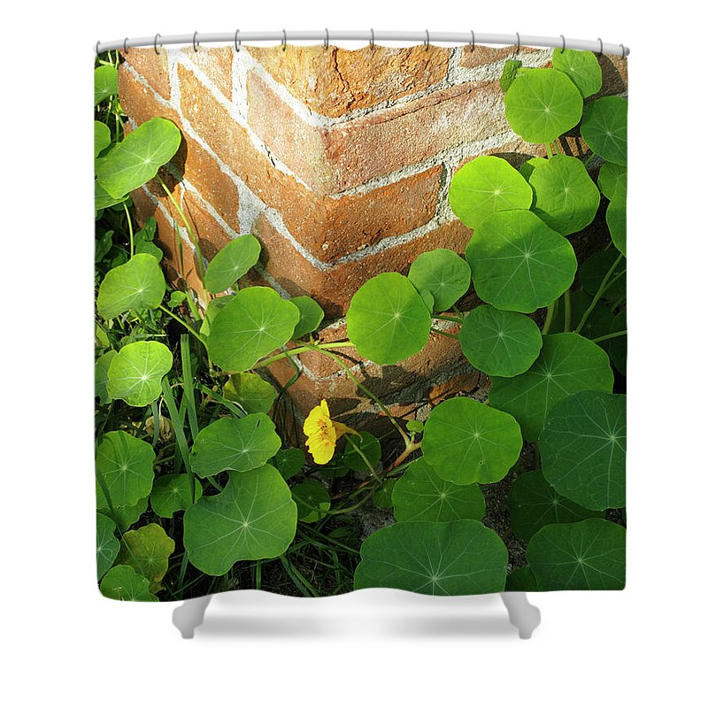 Vertical Shower Curtain featuring the photograph Nasturtium Leaves by Stefania Levi