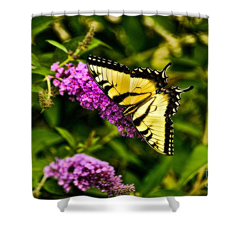 Butterfly Shower Curtain featuring the photograph New Arrival by Chris Fleming