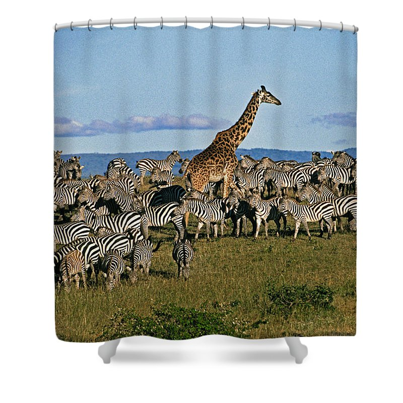 Africa Shower Curtain featuring the photograph Odd Man Out by Michele Burgess