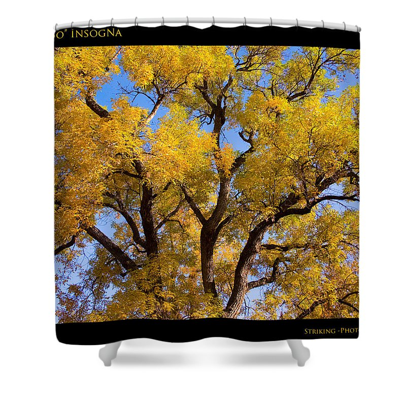 Gifts Shower Curtain featuring the photograph Old Giant Autumn Cottonwood by James BO Insogna