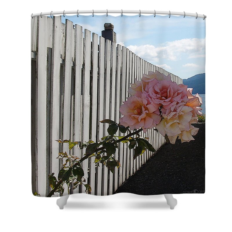 Rose Shower Curtain featuring the photograph Orcas Island Rose by Tim Nyberg