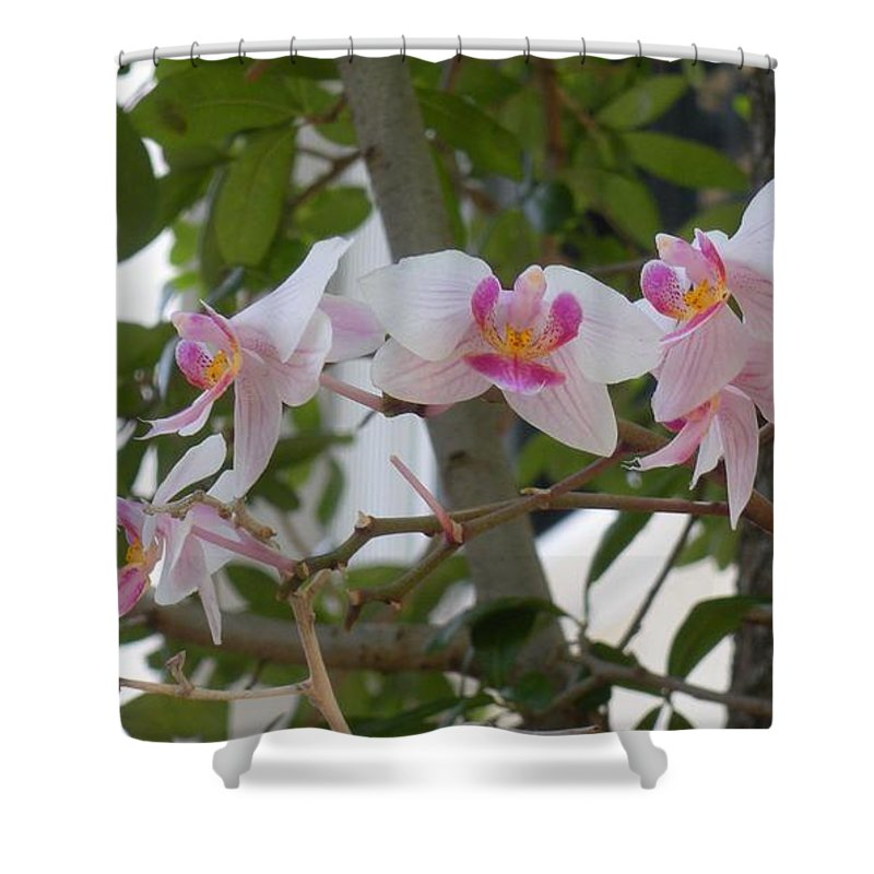 Shower Curtain featuring the photograph Orchid Bunch by Maria Bonnier-Perez