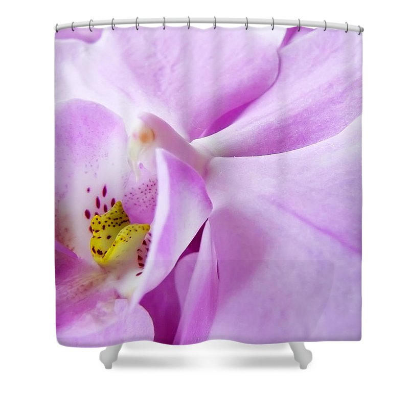 Orchid Shower Curtain featuring the photograph Orchid by Daniel Csoka