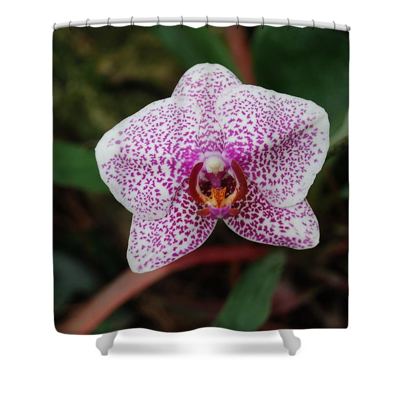 Pink Shower Curtain featuring the photograph Orchid by Rob Hans
