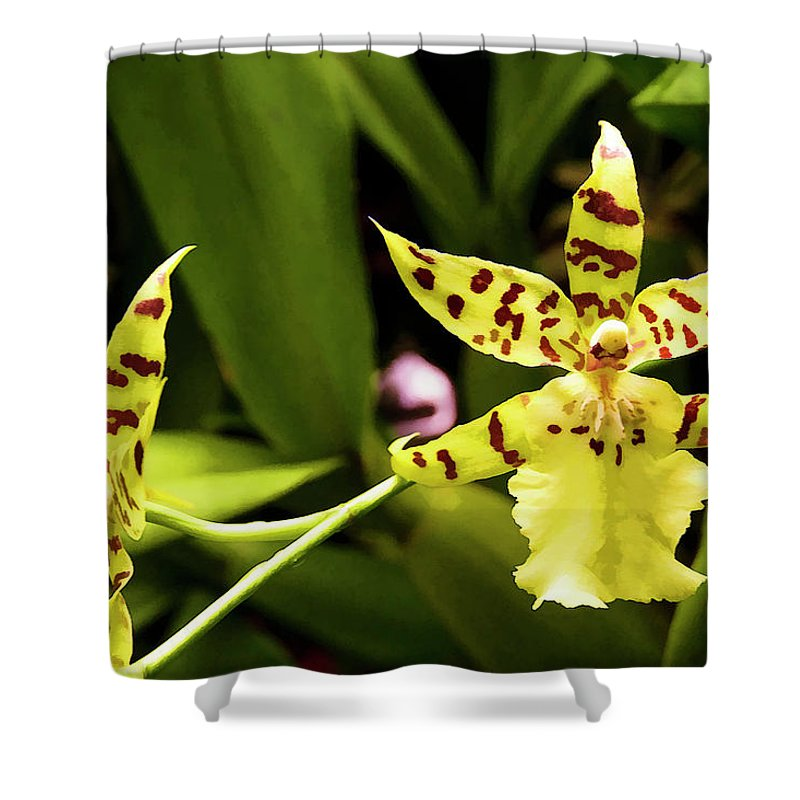 Orchid Shower Curtain featuring the photograph Orchids by Ricky Barnard
