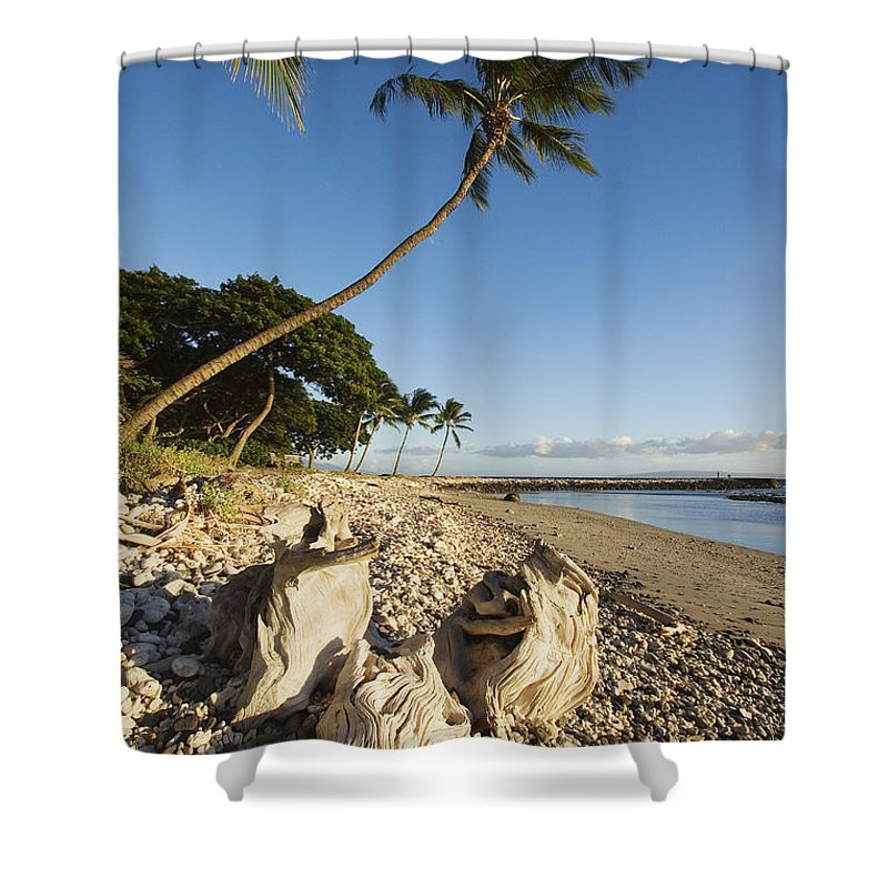 Afternoon Shower Curtain featuring the photograph Palm And Driftwood by Ron Dahlquist - Printscapes