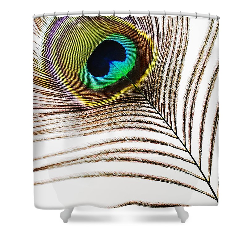 Abstract Shower Curtain featuring the photograph Peacock Feathers by Mary Van de Ven - Printscapes