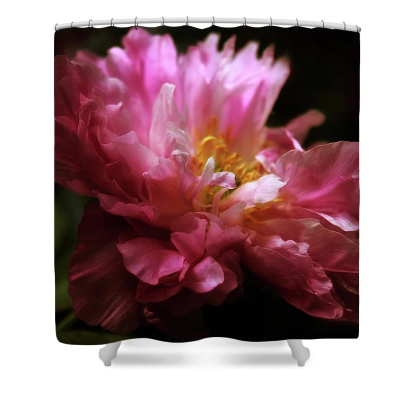 Peony Shower Curtain featuring the photograph Peony Pride by Jessica Jenney
