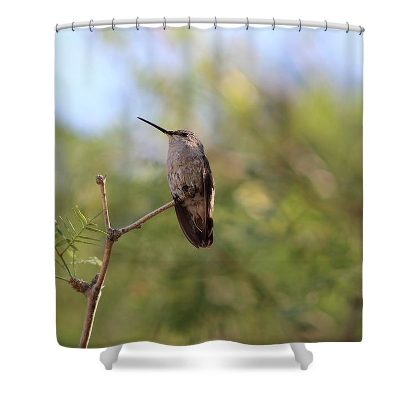 Humming Bird Shower Curtain featuring the photograph Perched Hummingbird 3 by Colleen Cornelius