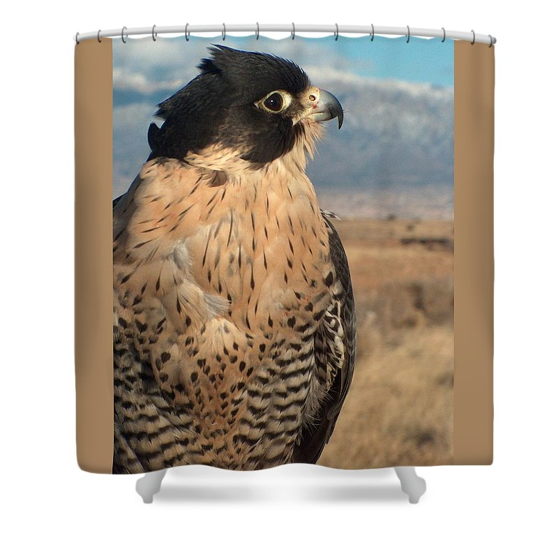 Peregrine Falcon Shower Curtain featuring the photograph Peregrine Falcon by Tim McCarthy