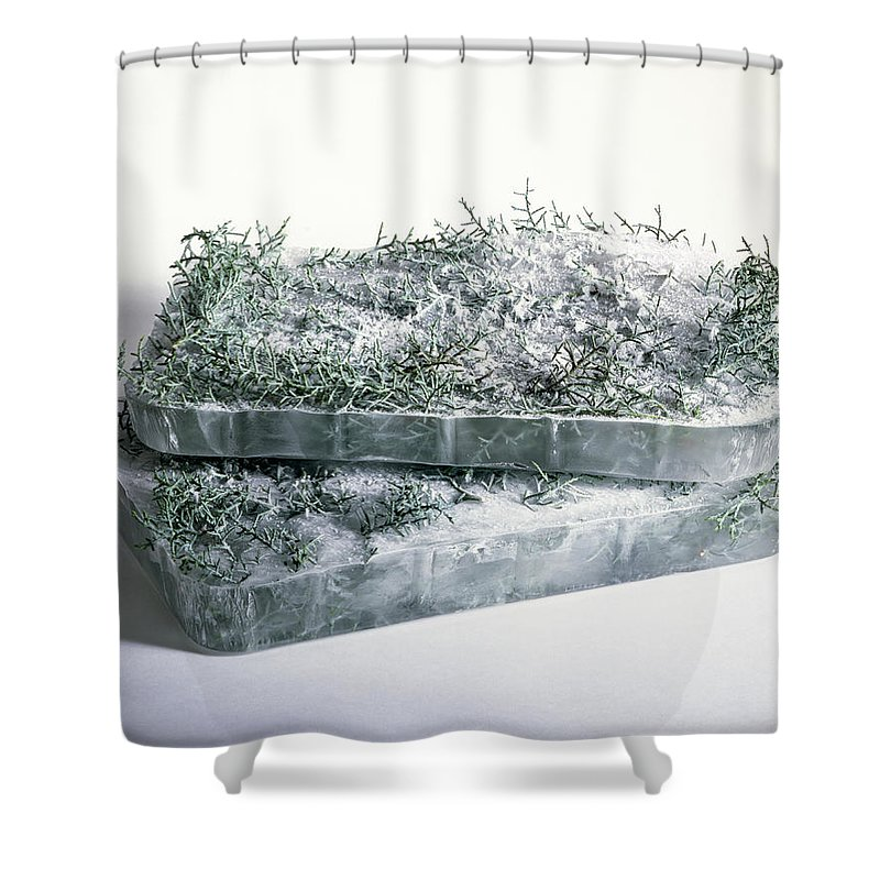 Composition Shower Curtain featuring the photograph Pine Twigs And Ice by Stefania Levi
